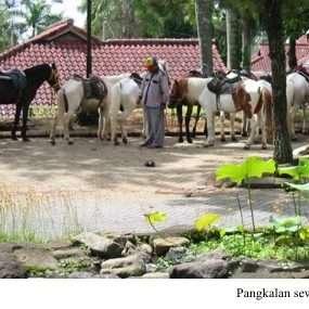 Pangkalan Sewa Kuda Yang Berlokasi Di Dalam Villa Kota Bunga Puncak